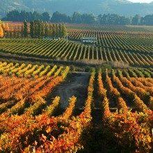 Guia de Vinícolas Chile – Mais de 70 para você escolher e Dicas Importantes